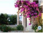 Apartments Villa Vanja - Bra� Croatia