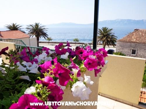 Apartmaji Jure - ostrov Hvar Hrvaška