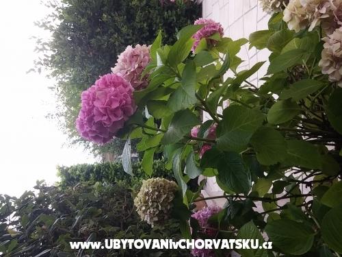 Apartmány Katarina - Novi Vinodolski Chorvatsko