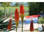 Apartments Mami� - Pako�tane Croatia