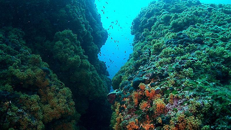 potápění Kampanel