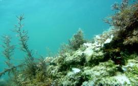 potápění Plič  Mramori