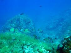 potápění Purple bay