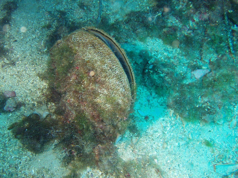 potápění Žuč Kamen