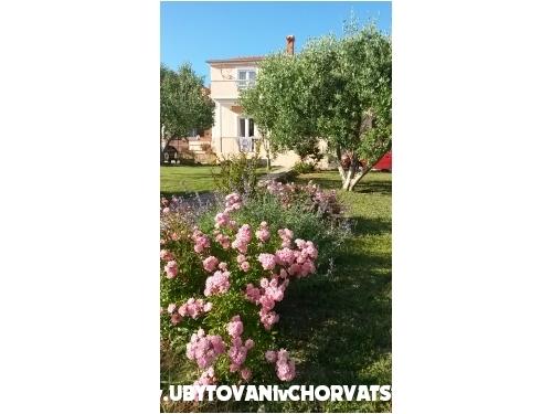 Apartmanok Ive - Privlaka Horvátország