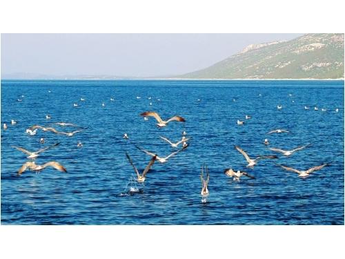 Zdenko Lukin - ostrov Ugljan Hrvaška